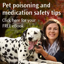 Pet poisoning and safety tips