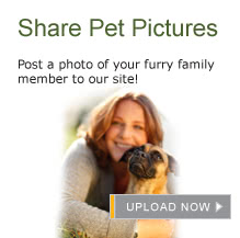 PetPictures