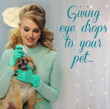 How to Apply Ophthalmic Drops to Your Pet's Eye